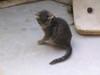 Cats_1